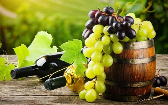 curso-online-de-viticultura-enologia-y-cata_l_secundaria_1